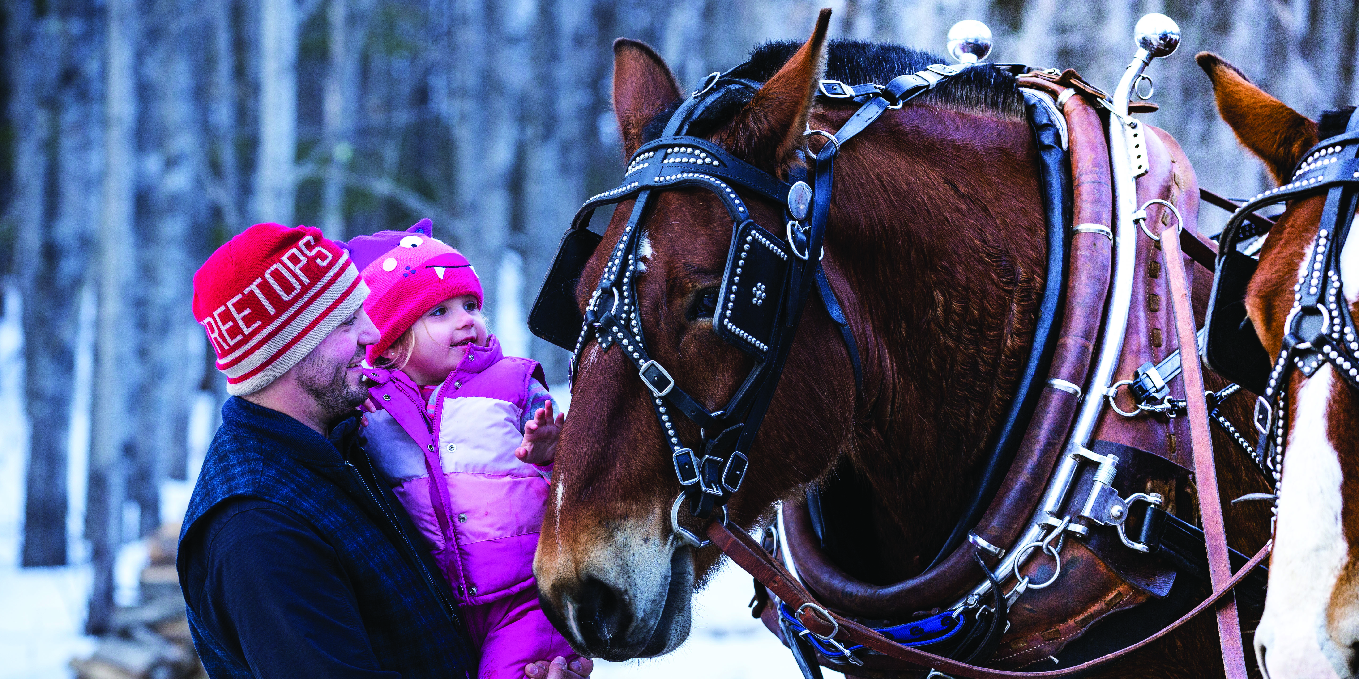 A man and child in winter gear pet a horse before a sleigh ride.