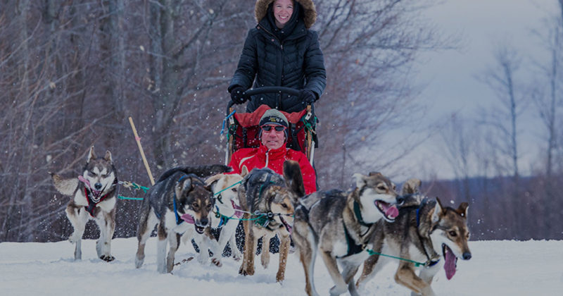 Woman driving dogsled and man sitting in sled pulled by a pack of sled dogs at Treetops Resort.