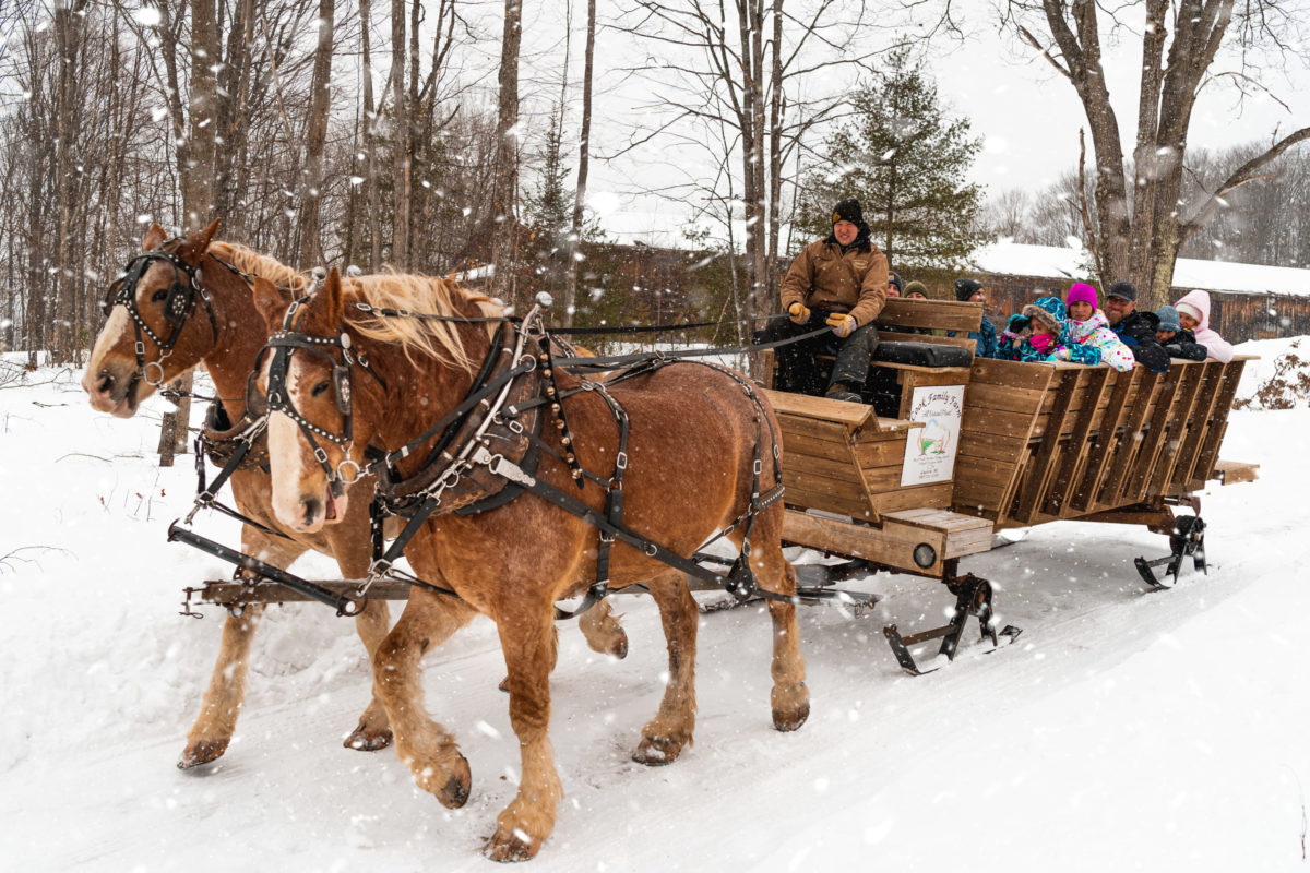 Wilderness Sleigh Ride Drive with Group