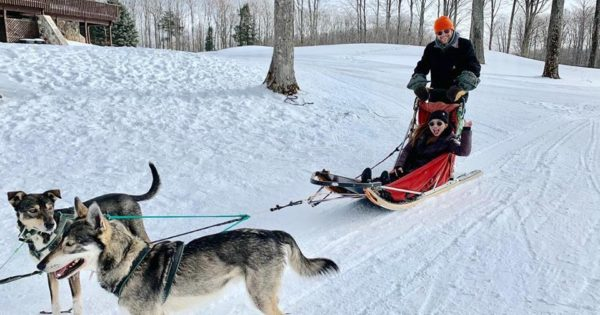 2 husky dogs pulling a red sleigh in the snow